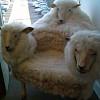 3 Headed Sheep Chair via Freshome.com