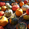 This assortment of squash and gourds offers unlimited Halloween fun potential. (Manny Proebster/sxc.hu)