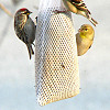 Photo of a clever DIY birdfeeder by fishhawk/Flickr.