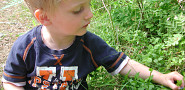 A young boy picks blueberries from a blueberry bush. (Photo: elinluna/morguefile.com)