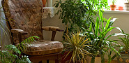 Photo of house plants and a vintage chair by lightkeeper/istockphoto.com.