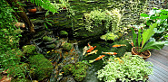 Photo of a koi pond and garden by Sutsaiy/istockphoto.com.