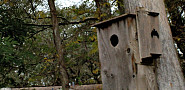 Bird and Bat Houses: Chris Winters/flickr (cropped)