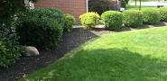 Yard clean up, edging and mulching