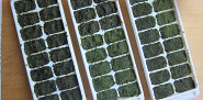 Freeze homemade pesto in ice cube trays and you'll be ready for pasta anytime. (Photo: Sayward Rebhal for Networx.com)