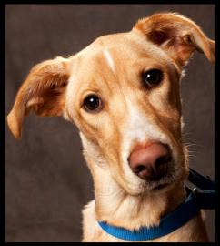 Zuri lives at the Humane Society of Charlotte.