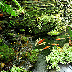 Caring For Koi Ponds Articles