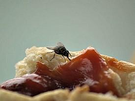 Photo: Jeffrey Kontur/flickr