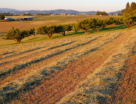 Straw fertilizes crop rows. (Photo: Craig Goodwin/sxc.hu)