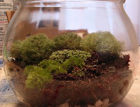 Check out the pea gravel in the bottom of this terrarium. (Photo: a2gemma/Flickr creative commons)