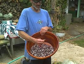 Dan Bodkin sorting a harvest.   Photo: Cris Carl