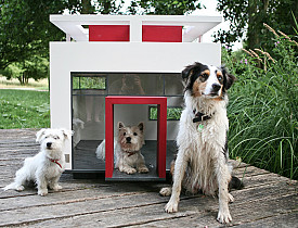 Cubix by Hundehaus via Bestfriendshome.com