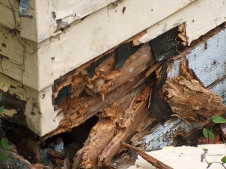 What Is Dry Rot And How Can You Prevent It Networx