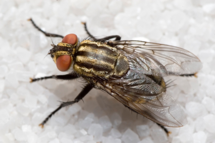 how to kill flies in trash can