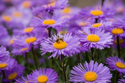 10 Flowers to Plant Right Now Articles Networx