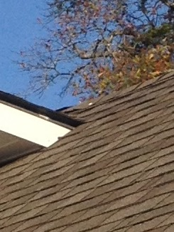 After repair roof looks great