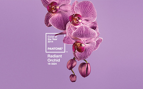 Pantone's Radiant Orchid