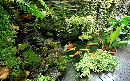 Photo of a koi pond and garden by Sutsaiy/istockphoto.com.