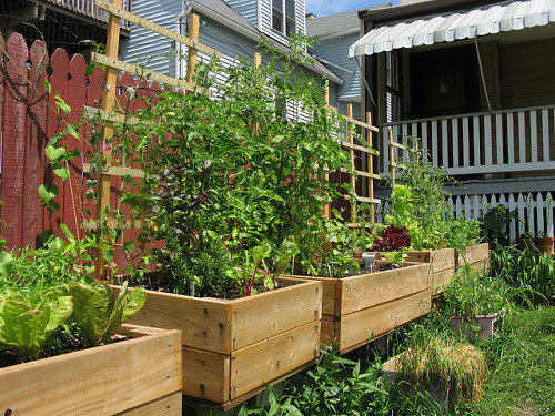 4x4 gardens in an urban Chicago backyard. Photo: roman.petruniak/flickr creative commons.