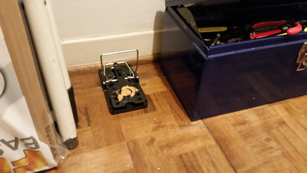 Mouse trap baited with peanut butter