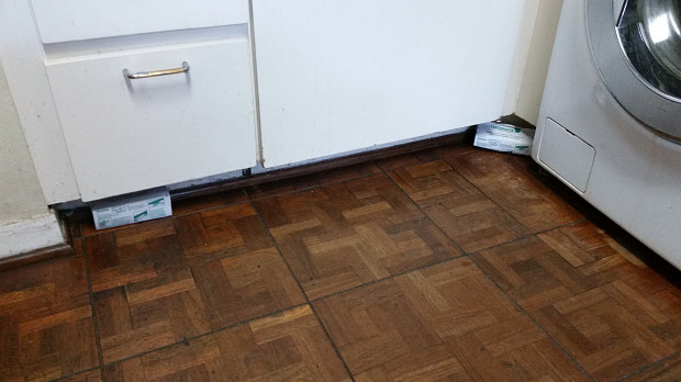 Two mouse traps in kitchen