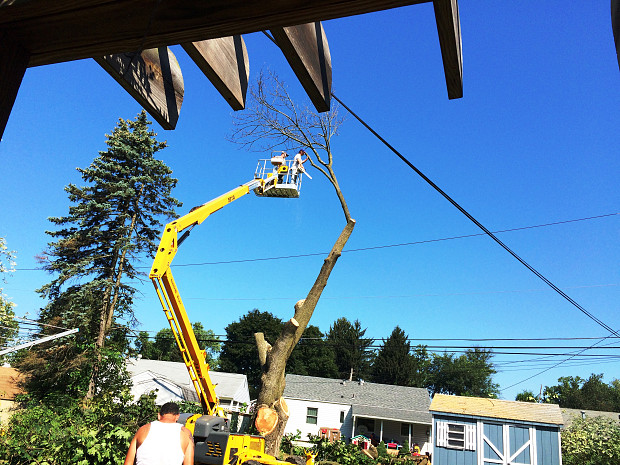 Tree removal pro in action