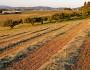 Straw mulch fertilizes crop rows. (Craig Goodwin/sxc.hu)