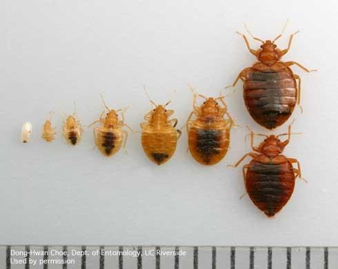 Madco Pest A Side Networx
