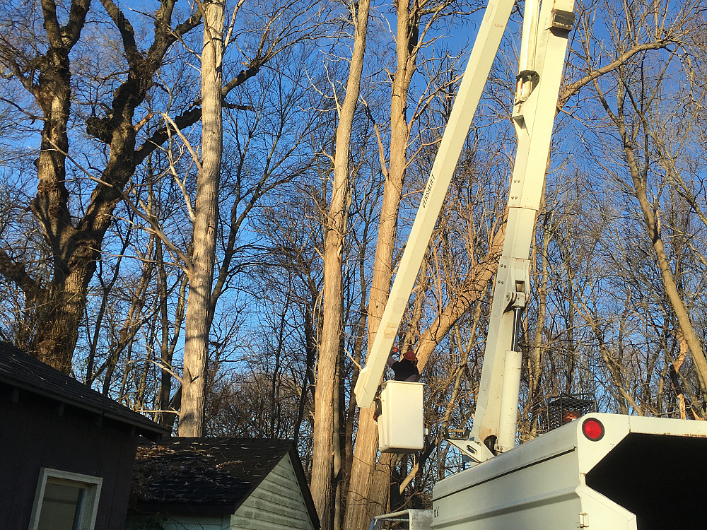 Zacarias Tree Service Networx