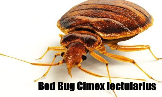 Cimex Exterminating Corp