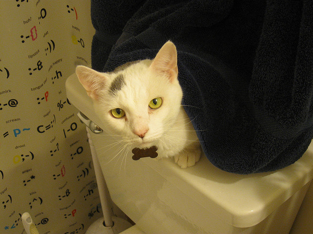 Training Your Cat To Use A Toilet Networx