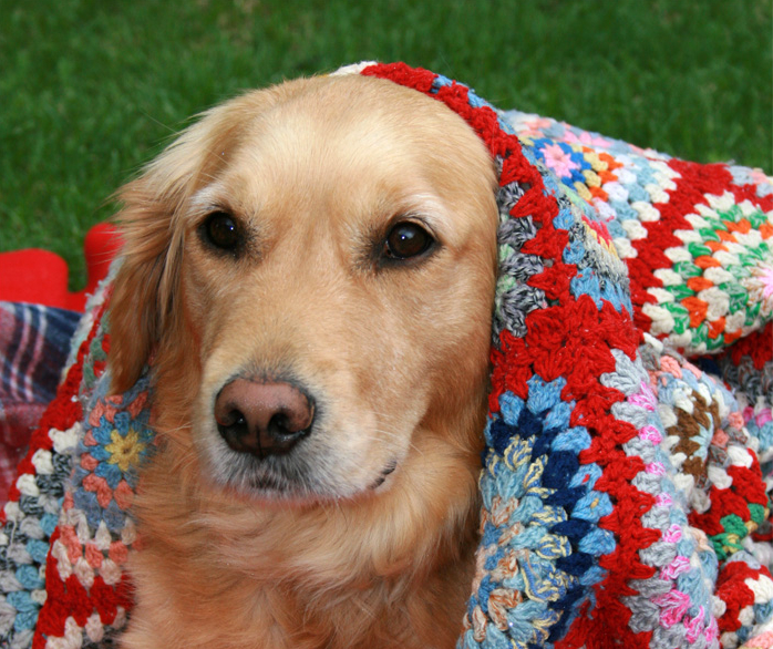 10 Ways To Keep Your Dog Warm In Cold Weather Networx