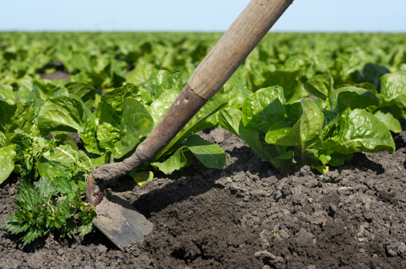 11 Ways To Control Weeds Without Chemicals Networx